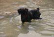 blacky-perro-pescador