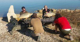 Filosofía de la pesca de la carpa