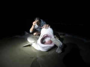 jose-maria-barquero-tiburon