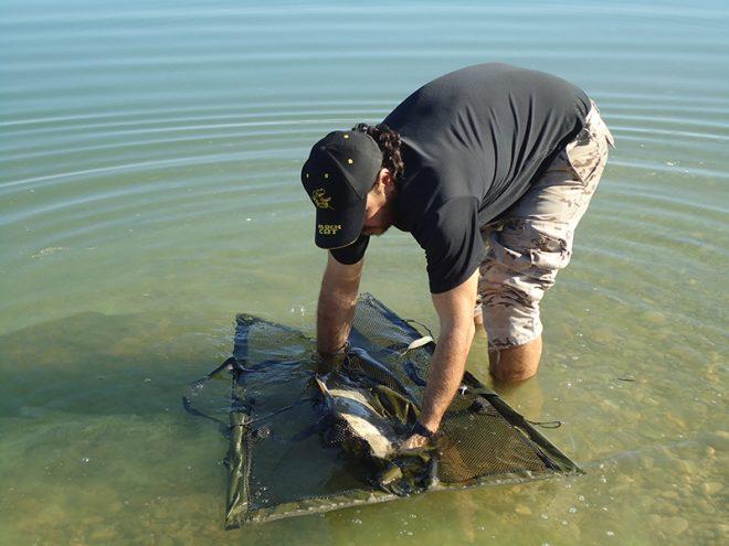 llevar-pez-agua-saco