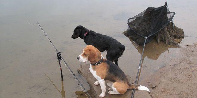 kali-blacky-perros