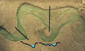 morfologia-rio