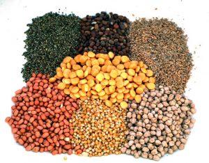 preparar-granos-cebado-carpfishing